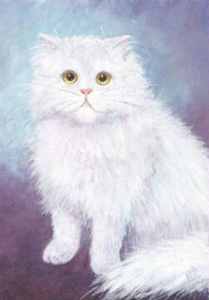 whitepersiansittingresiz.jpg
